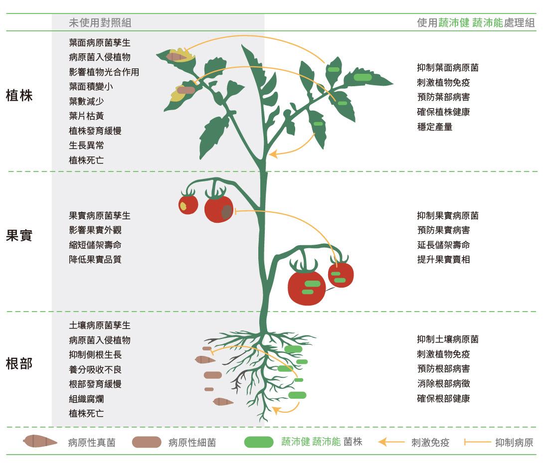預防植物病害