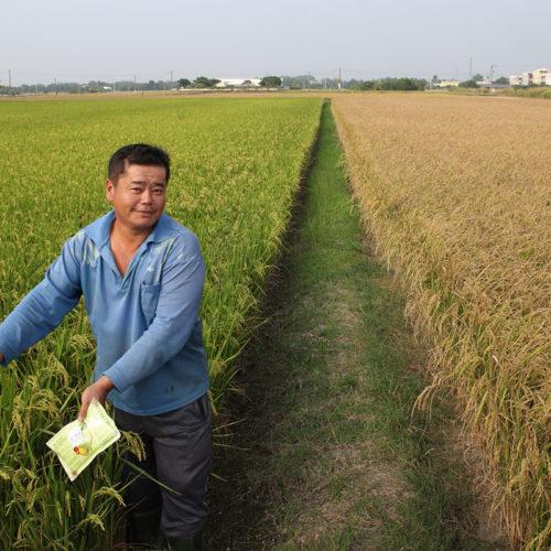 活力美蔬沛健防治水稻白葉枯病