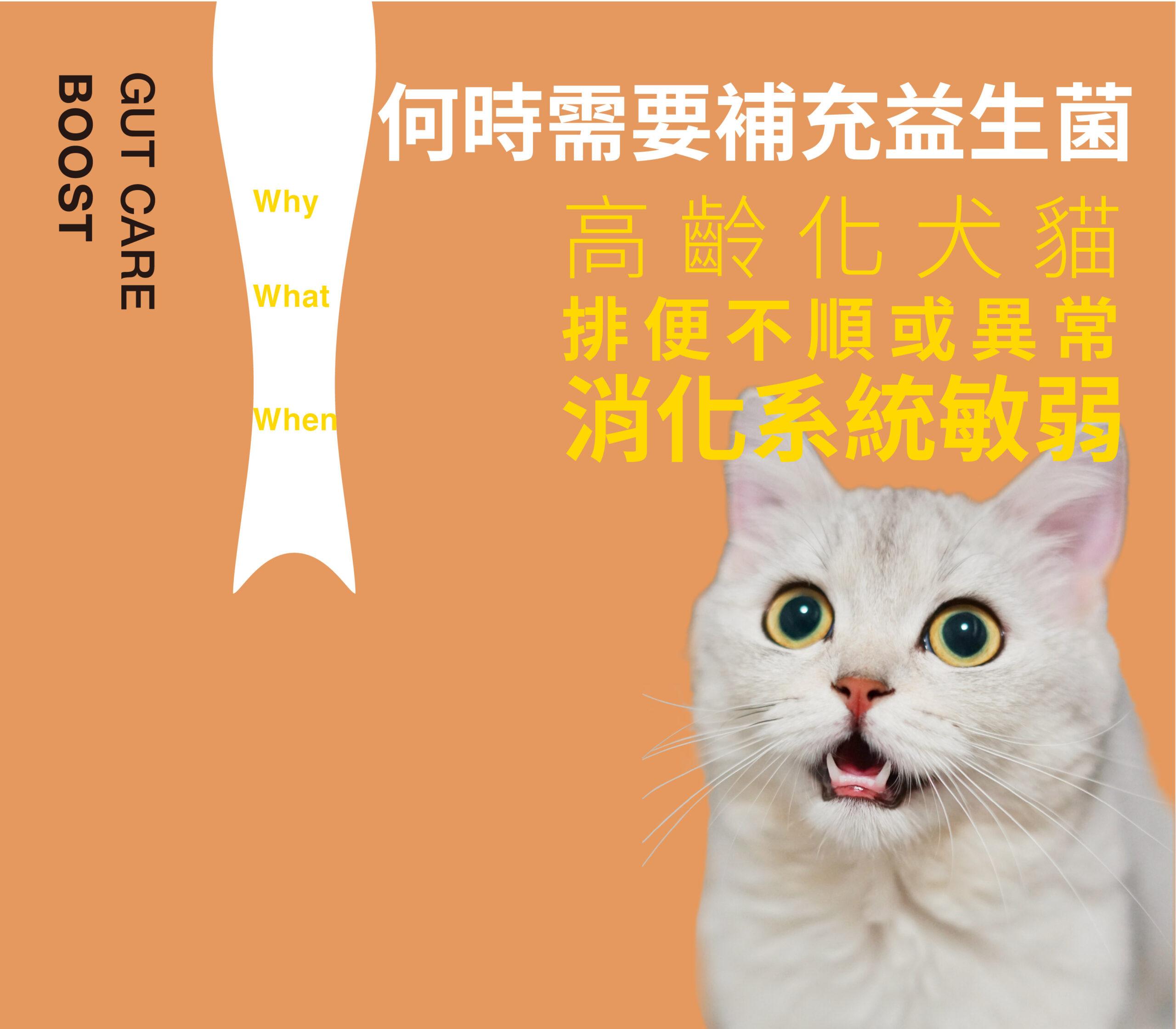 高齡貓、排便不順、消化系統敏弱、MONSTERBOOST